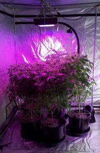 фитолампа, светодиодные лампы для растений светодиодная лампа для растений led лампы для растений освещение теплиц светильники для растений лампа для растений диодные лампы для растений лампы для растений led светильники для растений